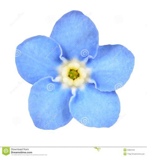 Blume Vergiss Mein Nicht 3822 by Vergissmeinnicht Blaue Blume Getrennt Auf Wei 223 Stockbilder