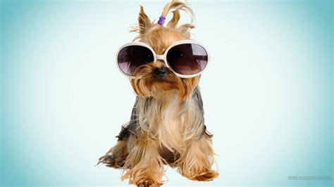 cool puppy cool dogs wallpaper