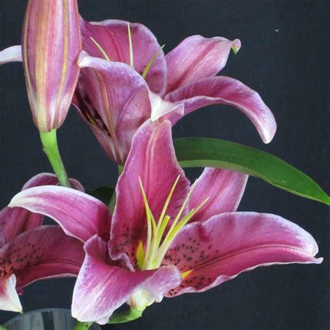 november seasonal flowers flowers in season november bridalguide