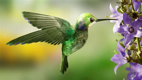 hummingbird food recipe dlielc