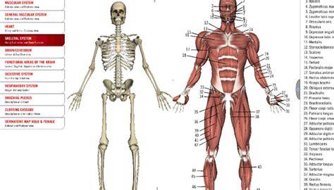 imagenes en 3d del cuerpo humano 15 apps para aprender y entender el cuerpo humano