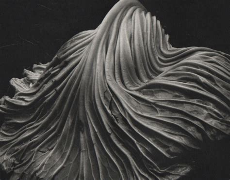 edward weston 1886 1958 icons edward weston 1886 1958 cabbage leaf catawiki