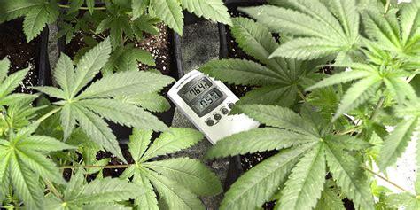 cannabis room temperature best temperature in your marijuana grow room