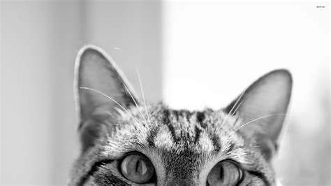 wallpaper tumblr cat browse a large selection of wallpapers hipster cat