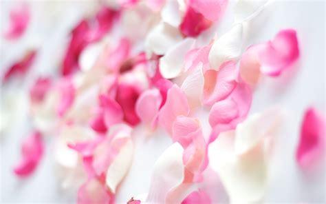 wallpaper flower petal pink flower petals wallpaper allwallpaper in 15288 pc
