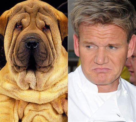 Tas Beckham Gordon 01bv521 siempre se ha dicho que las mascotas se parecen a su amo