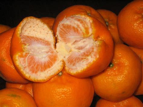 orange colored fruit mandarin orange colored fruits buy orange colored fruits