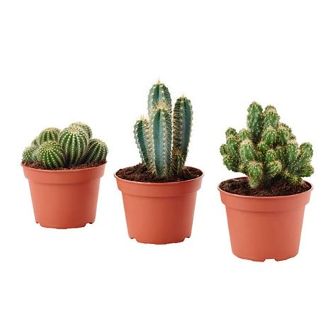 ikea vasi piante cactaceae pianta da vaso ikea