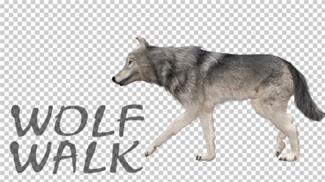 Kaos 3d Umakuka Walking Wolf realistic 3d wolf walk animation by handroxg videohive