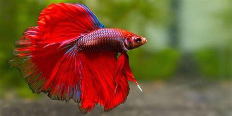 tatuaggi fiori tropicali pesci tropicali d acquario 5 esemplari bellissimi best5 it