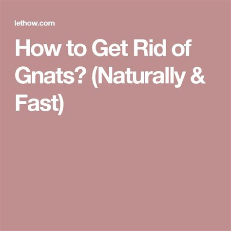1000 ideas about killing gnats on get rid of