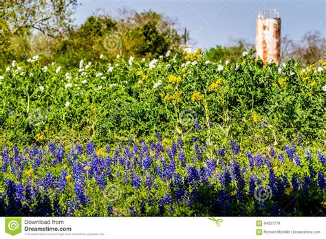 Mixed Memorable 9 Tx Oceanseven wildflowers and water tank stock photo image 64327778