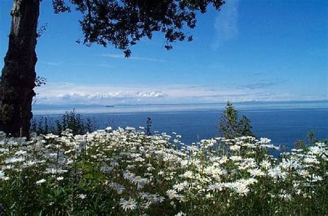 port angeles bed and breakfast colette s bed and breakfast inn port angeles wa b b reviews tripadvisor