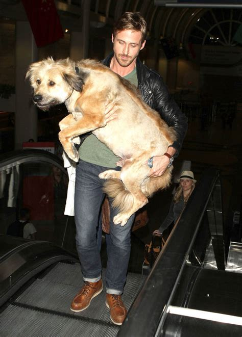 Ryan Gosling rescues a dog while out for dinner with Eva