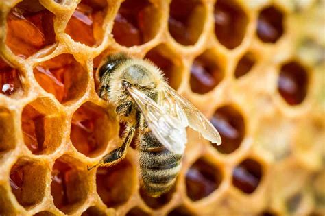 when do bees hatch honigmanufaktur honigmayr bio
