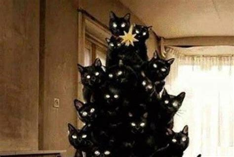 your creepy black cat christmas tree has arrived stuff