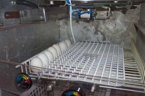 lade da riscaldamento lade per pulcini prezzo costruzione incubatrice