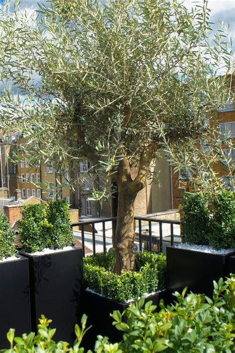 Tree Planters Uk by Roof Terrace Design Roof Terrace Planters Outdoor
