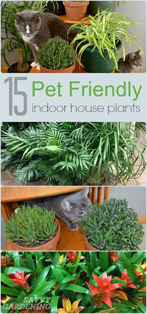 house plants safe for cats 15 indoor plants that are safe for cats and dogs plants