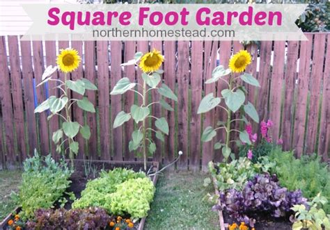 Square Foot Gardening Flowers Compare Back To Garden Lasagna Garden And Square Foot Garden Hometalk