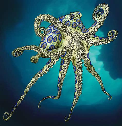 wallpaper blue ring blue ring octopus wallpaper wallpapersafari