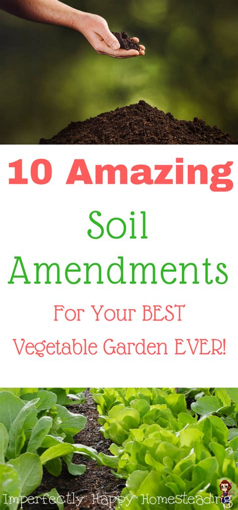 10 Amazing Soil Amendments For The Best Vegetable Garden Soil Amendments For Vegetable Garden