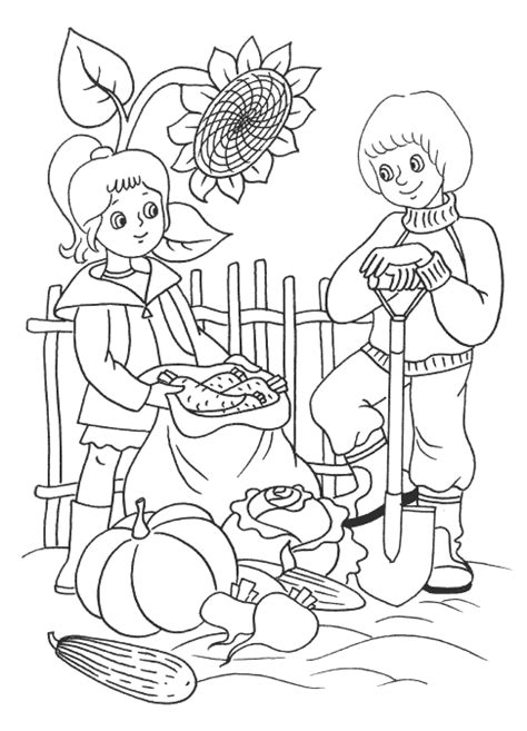 Coloring page - Harvest vegetables