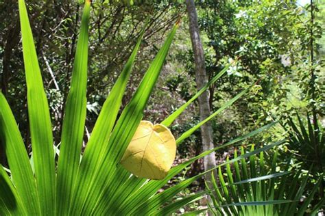 Key West Tropical Forest And Botanical Garden A Crab Spider Picture Of Key West Tropical Forest And Botanical Garden Key West Tripadvisor