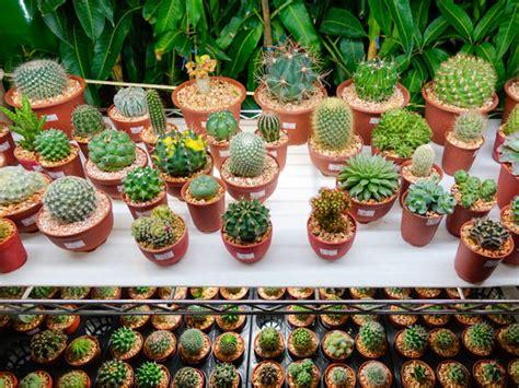Zimmerpflanzen Deko Ideen by Zimmerpflanzen Pflanzen Deko Ideen F 252 R Moderne
