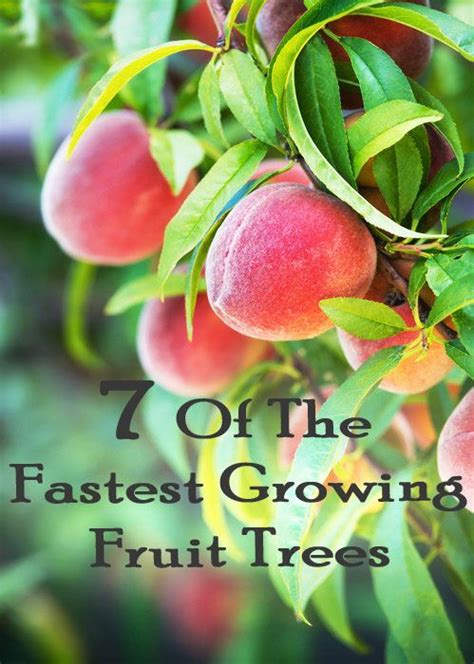 7 fruit tree 7 of the fastest growing fruit trees growing a food