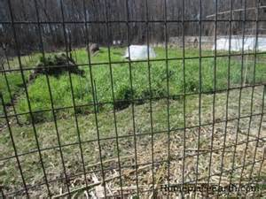 Fences For Dogs Backyard Welded Wire Fence Homeplace Earth