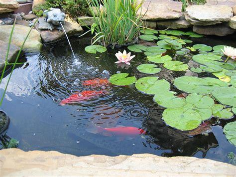 backyard fish pond maintenance the water garden care feeding of pond fish quiet corner