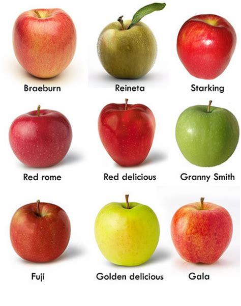 cual es la planta de washington variedades de manzas clases tipos y clasificaciones