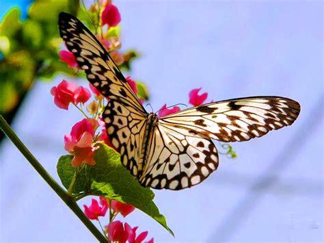 imagenes con mariposas image gallery hermosas flores con mariposas