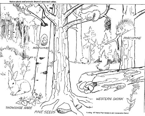 temperate rainforest coloring pages forest coloring pages printable coloring page purse