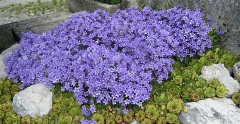 fiori da giardino primavera estate piante annuali come avere la fioritura a estate