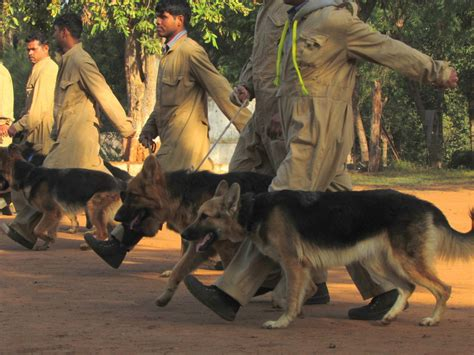 how are sniffer dogs trained india steps up efforts to combat wildlife trade