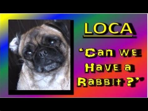 loca the pug loca the pug is dead i m what doovi