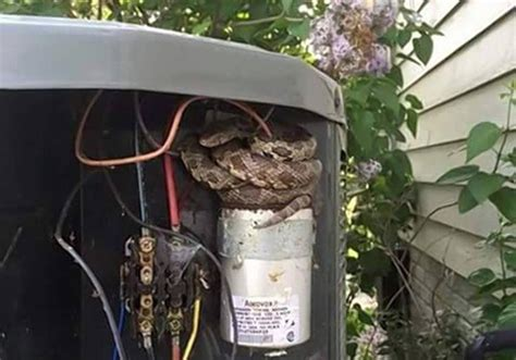 capacitor snake ga repair worker finds snake coiled up in air conditioner ny daily news