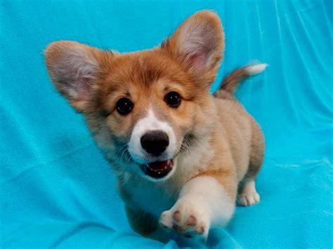 puppies n puppy names unique puppies puppy