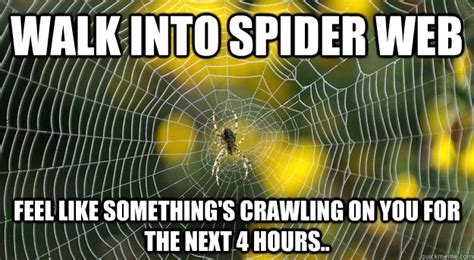 Web Memes - walk into spider web feel like something s crawling on you