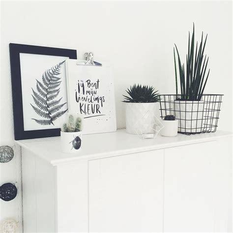 große zimmerpflanzen kaufen 1485 besten einrichtung bilder auf badezimmer