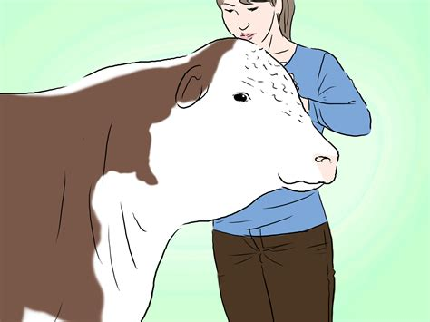 how to a cattle to work cattle how to identify hereford cattle 4 steps with pictures wikihow