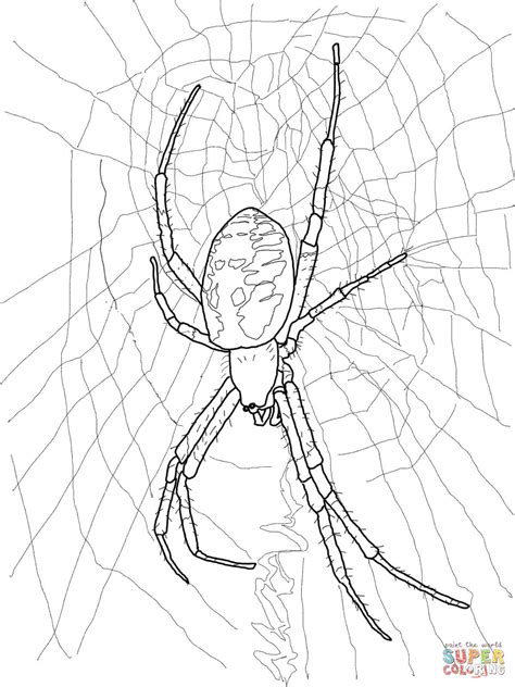Garden Spider Coloring Page Black And Yellow Garden Spider Coloring Page