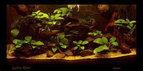 biotope aquascape joaoavo s planted tanks photo id 17491 full version