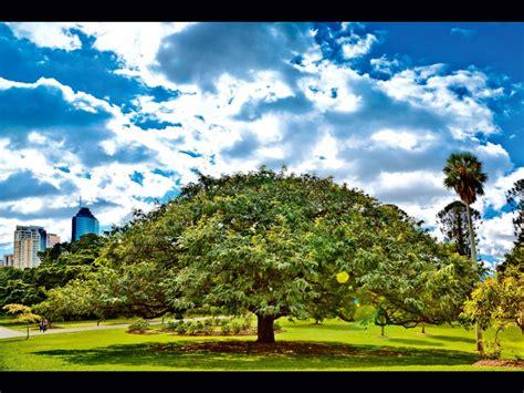 Brisbane Botanic Garden Your Winner Brisbane Botanic Gardens Australian Traveller