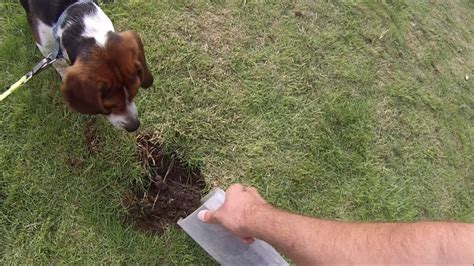 puppy keeps how to stop dogs digging up the garden