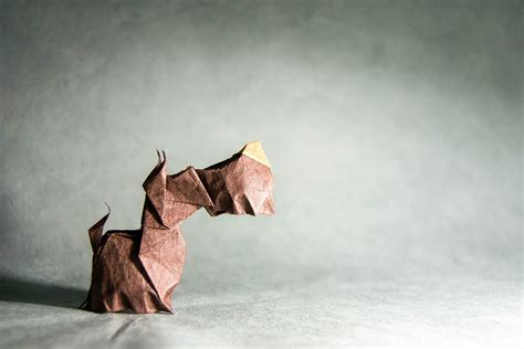 dogs in origami 30 breeds from terriers to hounds books 25 pawsome origami dogs that you mutt see