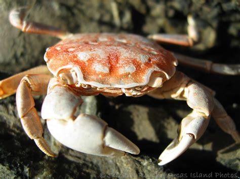 crabs wallpaper aquatic sea animals
