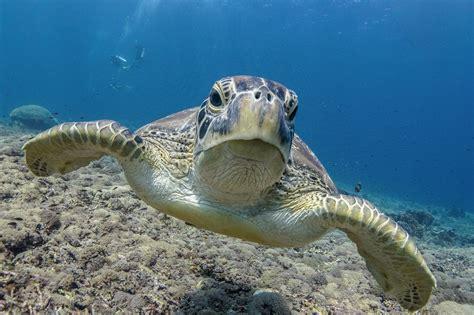 dive gili islands the secret diving spots on the gili islands bask gili meno
